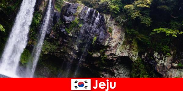 Jeju di Korea Selatan pulau vulkanik subtropis dengan hutan yang menakjubkan bagi orang asing